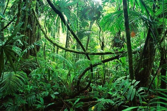 Chapter 53 – Jungle Reconnaissance